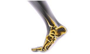 Piede e caviglia